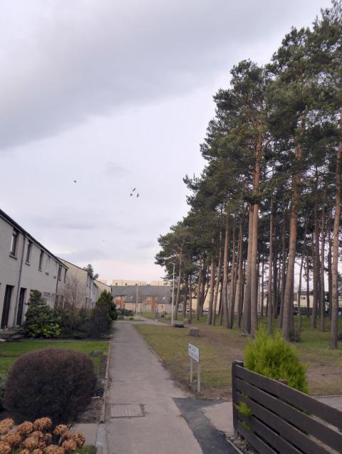 waulkmill trees1