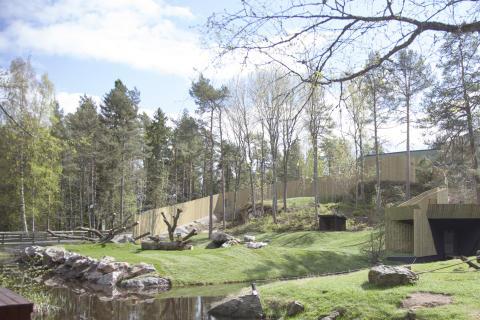 Större område att upptäcka för Kolmårdens gorillor
