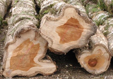 Life Forestry: Waldanleger brauchen verlässliches Geschäftsmodell