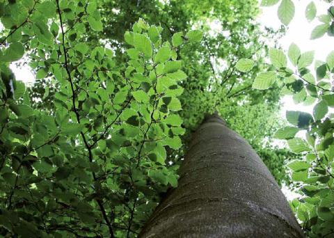 Skogen är populärare än någonsin trots minskad lönsamhet för skogsbruket