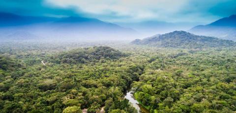 Nestlé laajentaa metsien käytön tarkkailua ja lähtee mukaan kehittämään julkista tutkapalvelua