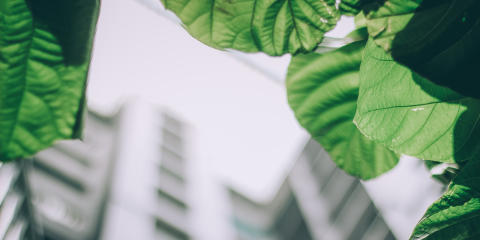 SweGreen becomes partner in Strategic Innovation Program, Viable Cities: Farming as a Service becomes a new tool in the fight against climate change
