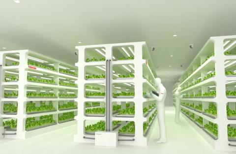 Toshiba to Commercialize Vegetable Production at New Plant Factory