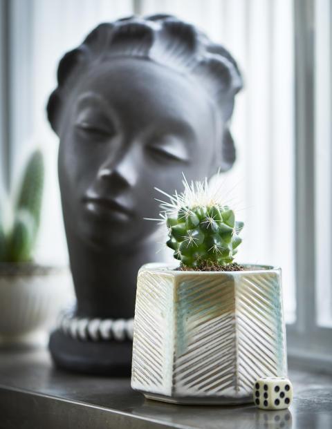 Kaktus, miniväxter Plantagen