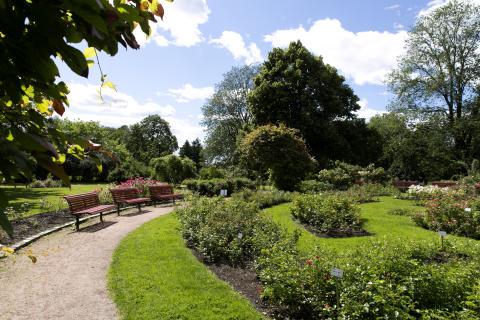 Rosariet ligger i Frognerparken. Et perfekt sted å fri på.