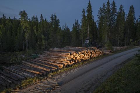 Fremkjøring av tømmer fra hogstfelt til velteplass ved skogsbilveg i Bangdalen
