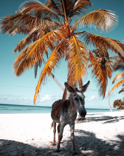 Sommer unter Palmen - Traumurlaub in der Dominikanischen Republik