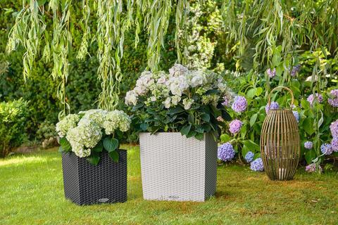LECHUZA CUBE Cottage bepflanzt mit prächtigen Hortensien