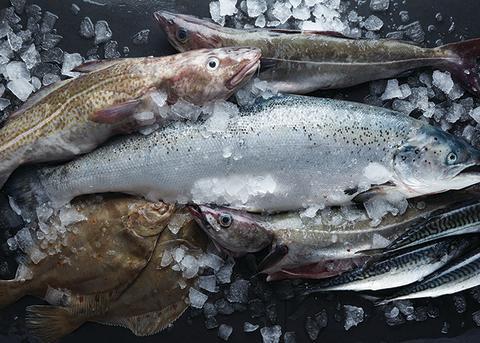 Våra möjligheter att påverka framtidens fiske är många