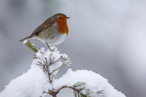 Six Reasons to Visit Scotland this Christmas