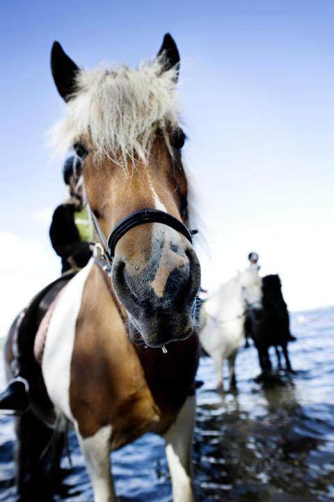 Horseback riding, Storsjöbygden