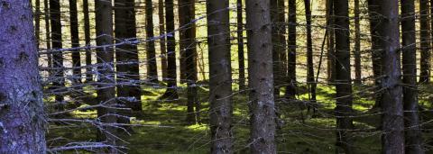 Skogen tar Weld till skogen
