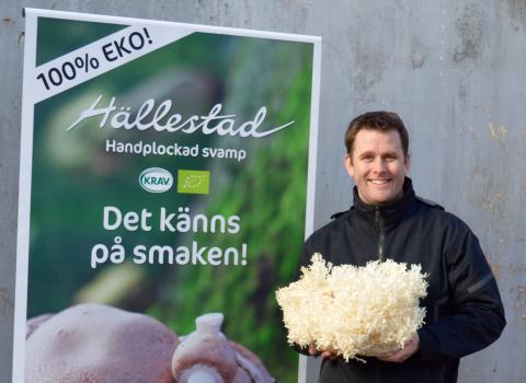 Sveriges ledande svampproducent blir 100 procent eko