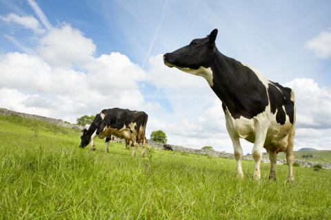 Arla Foods to further strengthen its cooperative status in the UK
