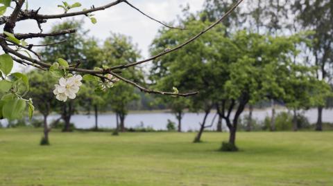 Korseberg Park, grönyta