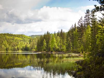 Mange vil kjøpe statens skoger