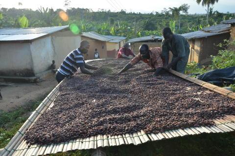 Cocoa Life 4