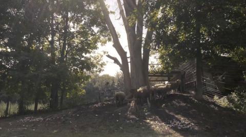 Lenore Malen, Eve in Sheepland, video 18 min, 2019