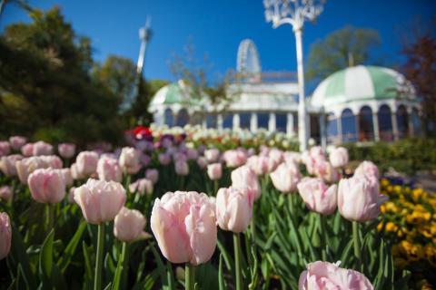 Lisebergs trädgårdsdagar 8-11 maj