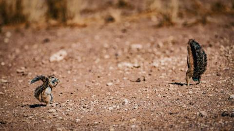 Alphaddicted_Roadtrip Namibia_01