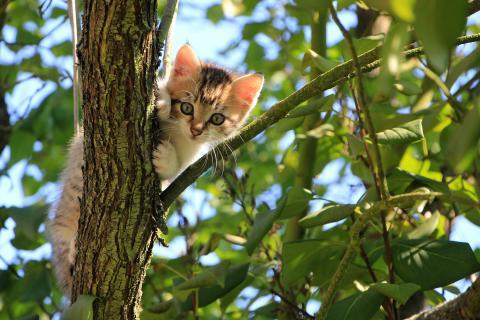 Att släppa ut sin katt – 5 tips från Mjau