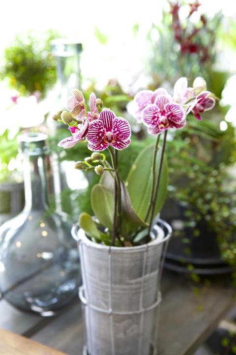 Orkidéutställningen - orkidéer med vänner