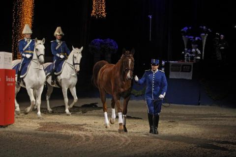 Hästen heter Turbin
