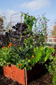 Nytt vackert växtstöd – perfekt i pallkragen!