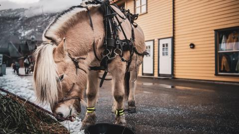 Vintermarkedet i Flåm tilbyr opplevelser for store og små