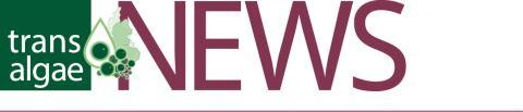 News from TransAlgae