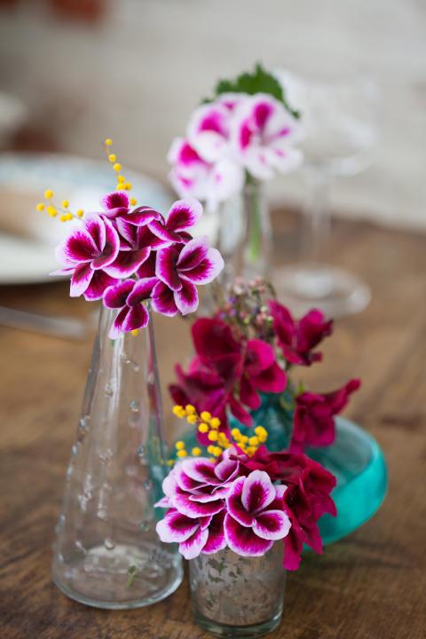 Vaser med ängla-/pensepelargon