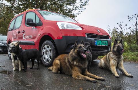 Posten_hunder_på_frimerker