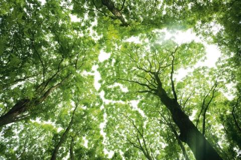 Träden är livsviktiga för oss alla!