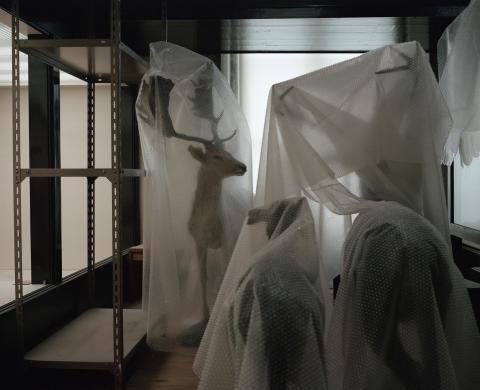 Tommaso Rada, Anatomy of a Museum 5