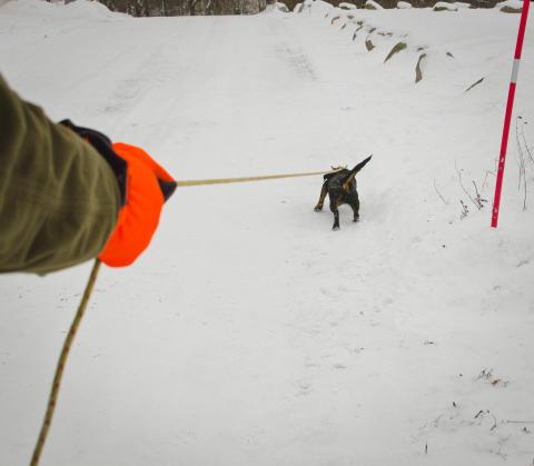 Undvik olyckor när snön driver ut vilda djur på vägarna