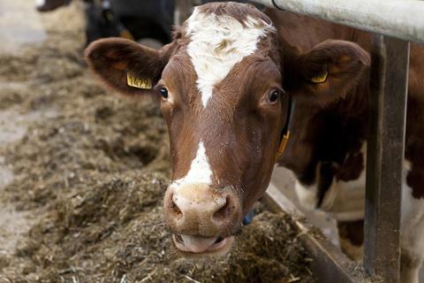 Importerad fodersoja påverkar miljön, oavsett hur den förädlats