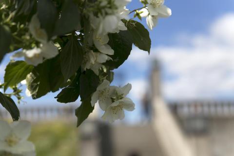 Lukt på blomstene på Bastionen