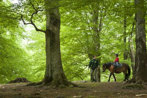 Skog i MittSkåne