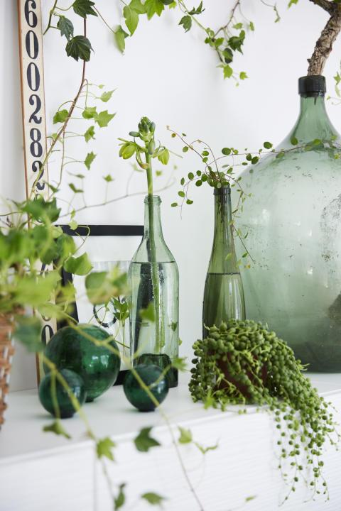 Inred med svenskodlade prydnadsväxter