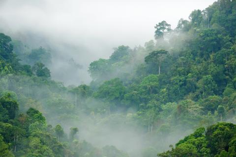 Verdens Skoves håb for den nye regering: En ny retning for både natur og klima