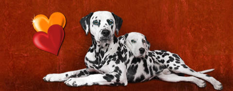 Gift er bland tusentals hundar på Stockholm Hundmässa