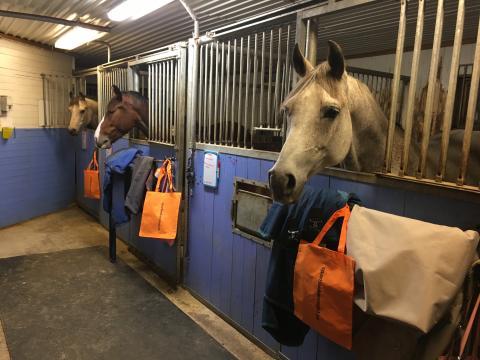 Kalix lyckliga hästar