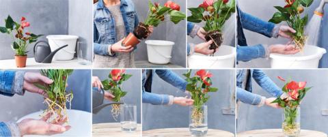Hydroponisk odling - Gör så här