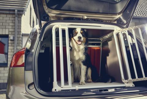 Hunde-Transportkiste