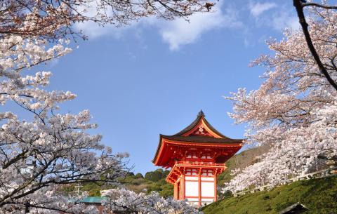 Kiehtova Japani - kaksi erilaista kiertomatkaa nousevan auringon maahan
