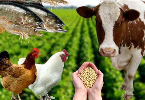 Animal Feed Additives Market 2019 to Make Great Impact in Near Future With Key Players Such as AJINOMOTO CO.,INC, Archer Daniels Midland Company, BASF SE, Cargill, Incorporated