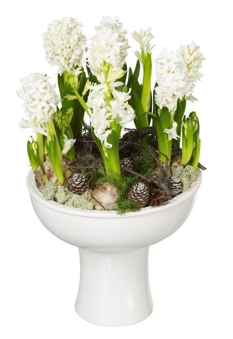 Jul på Interflora: hyacintplantering Bergsskål