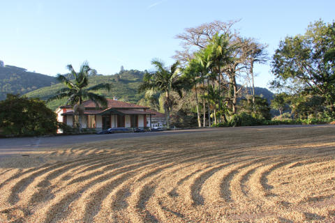 Miljøfokus på kaffefarmer