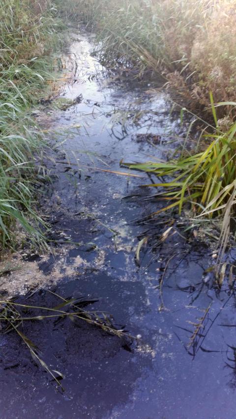 Orenat avloppsvatten till Sege kanal resultatet av gamla ledningar