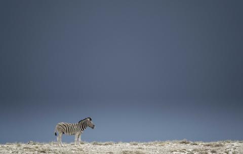 CS-301116-namibia_rx10-191